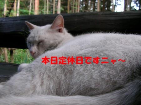 猫 定休日